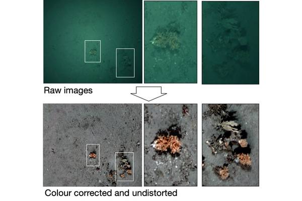 Colour and distortion correction of BioCam images. Image: Sonardyne